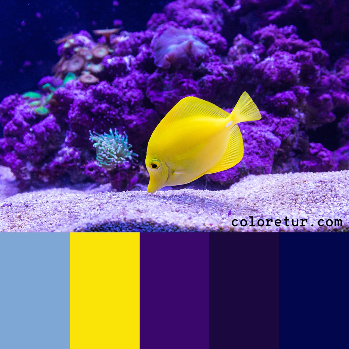 Color palette based on a blue tang fish