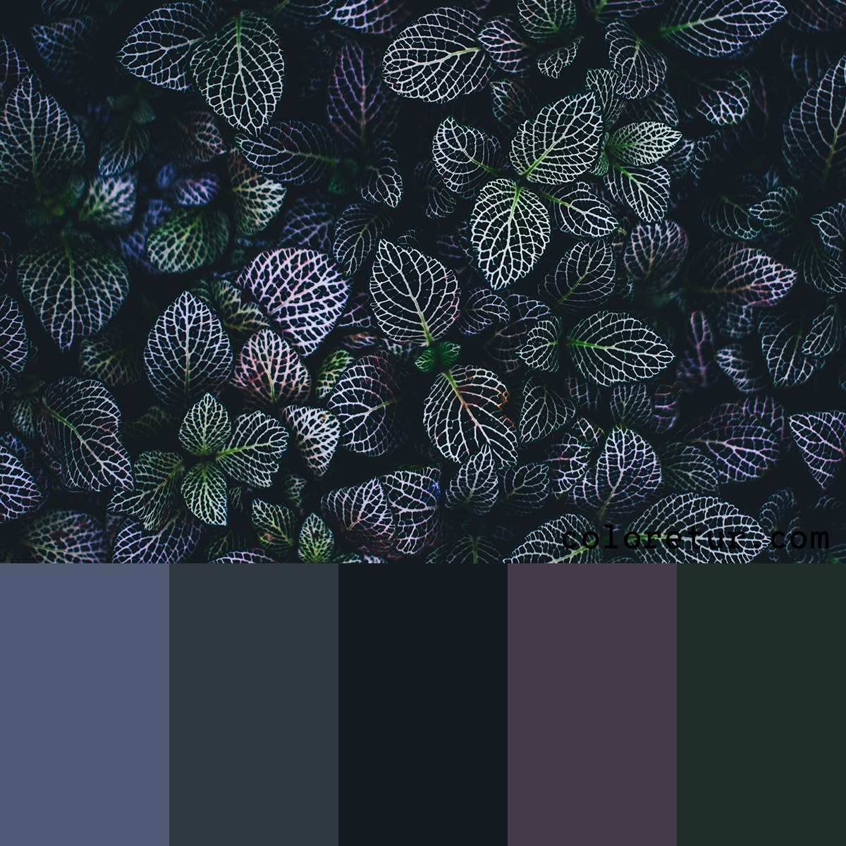 Dark foliage colour palette