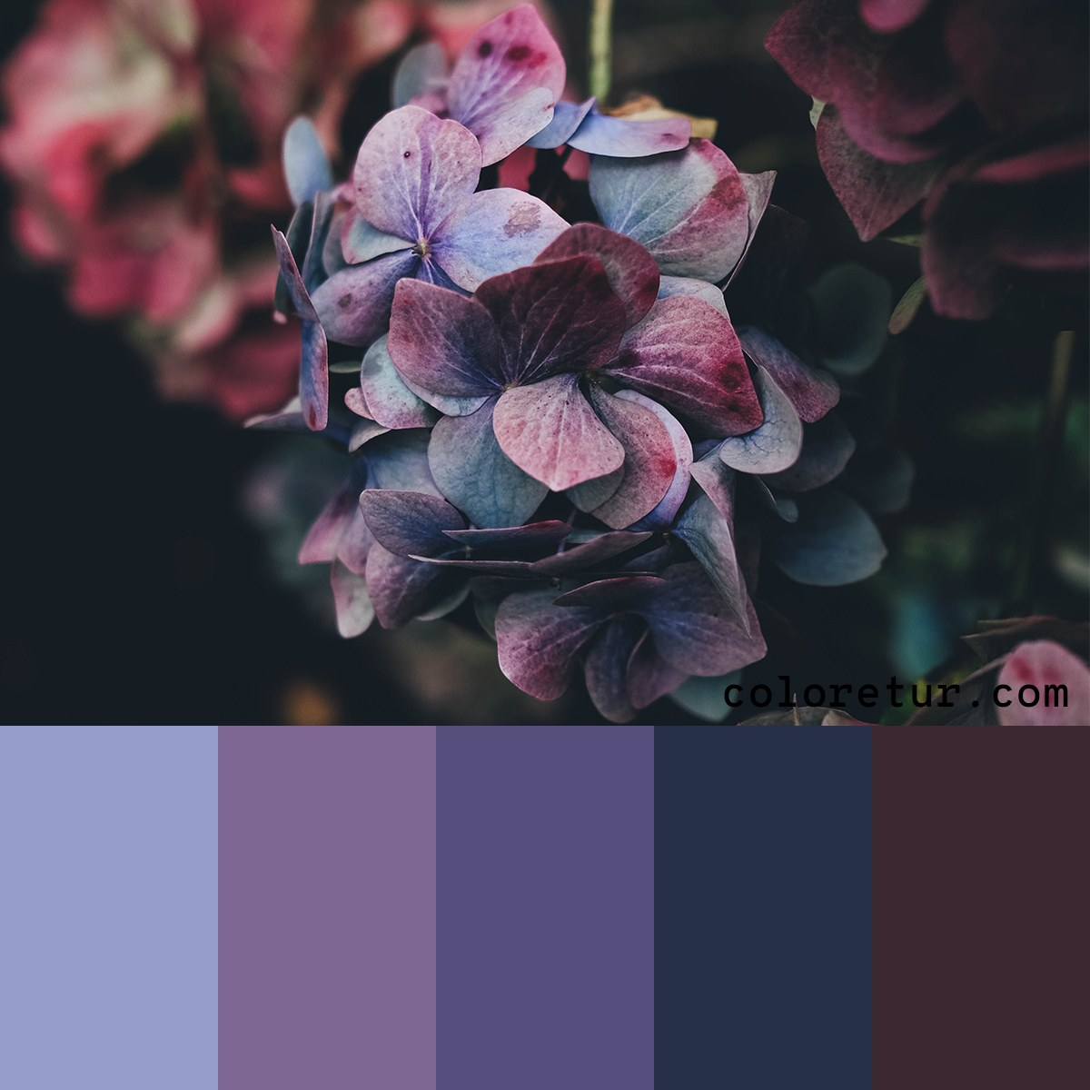 Color palette based on hydrangea flowers