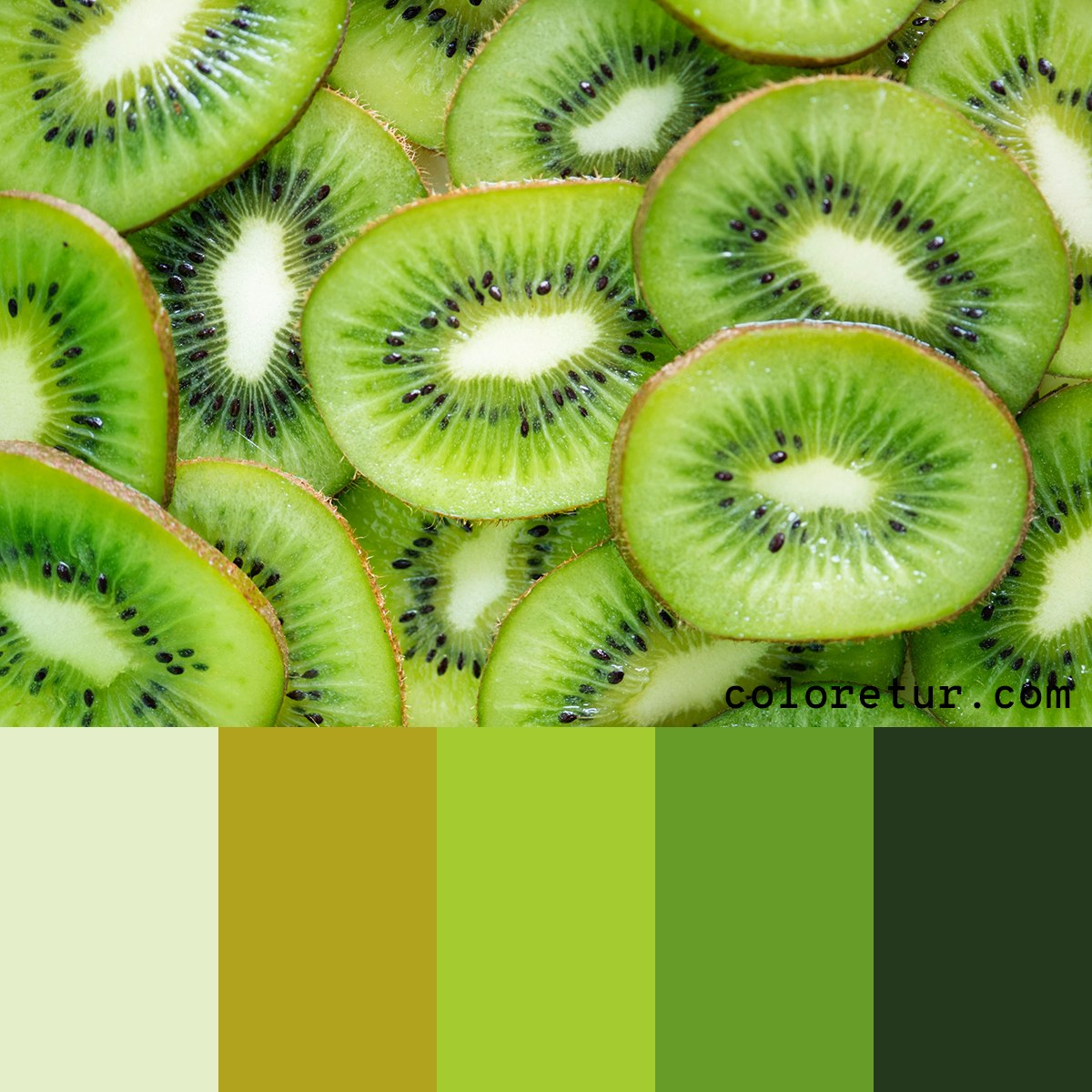 A bright, kiwi fruit inspired palette