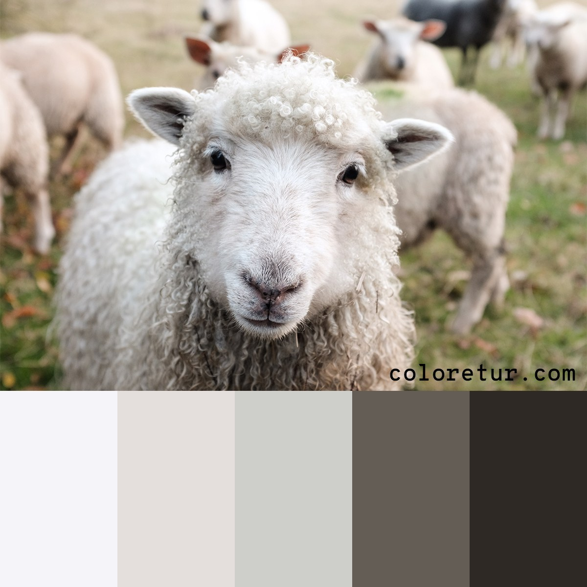 neutral palette from sheeps wool