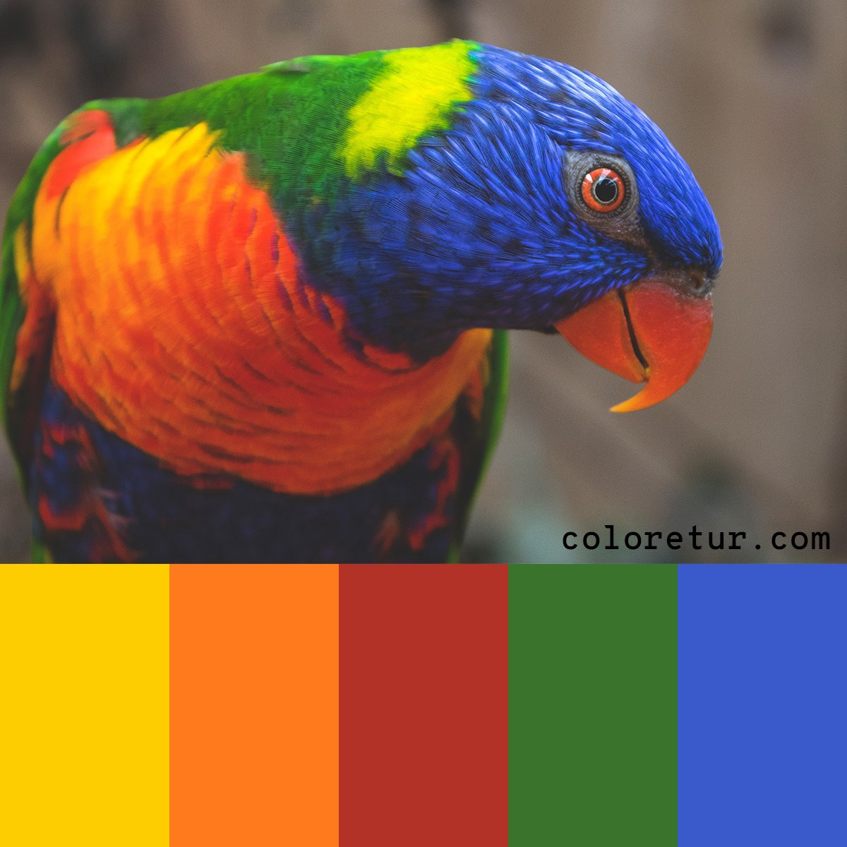 Color palette inspired by a rainbow lorikeet