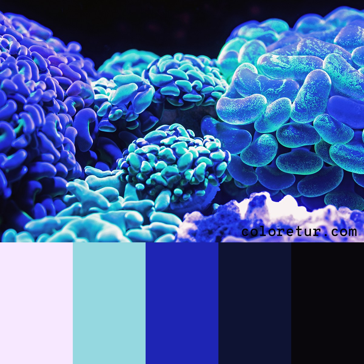 Color swatches based on a vibrant reef