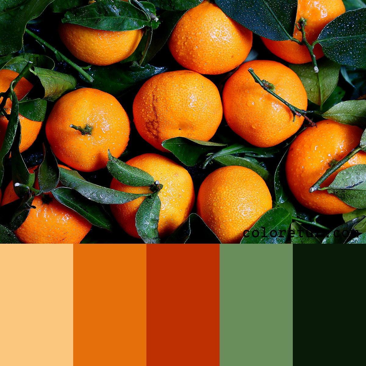 Color swatches from a bunch of oranges
