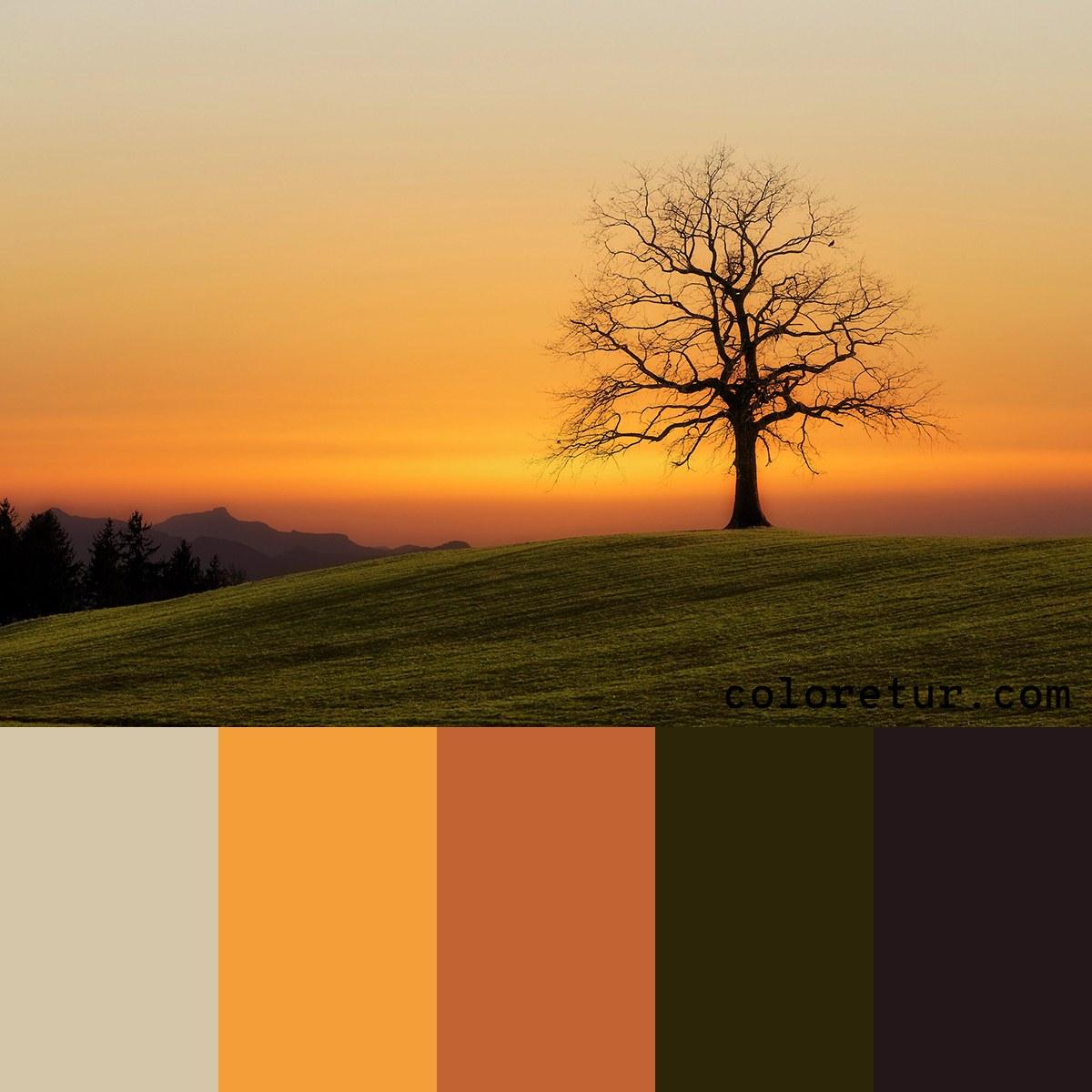 A warm sunrise color palette