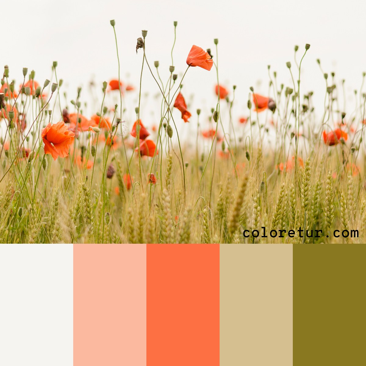 A wild flower color palette