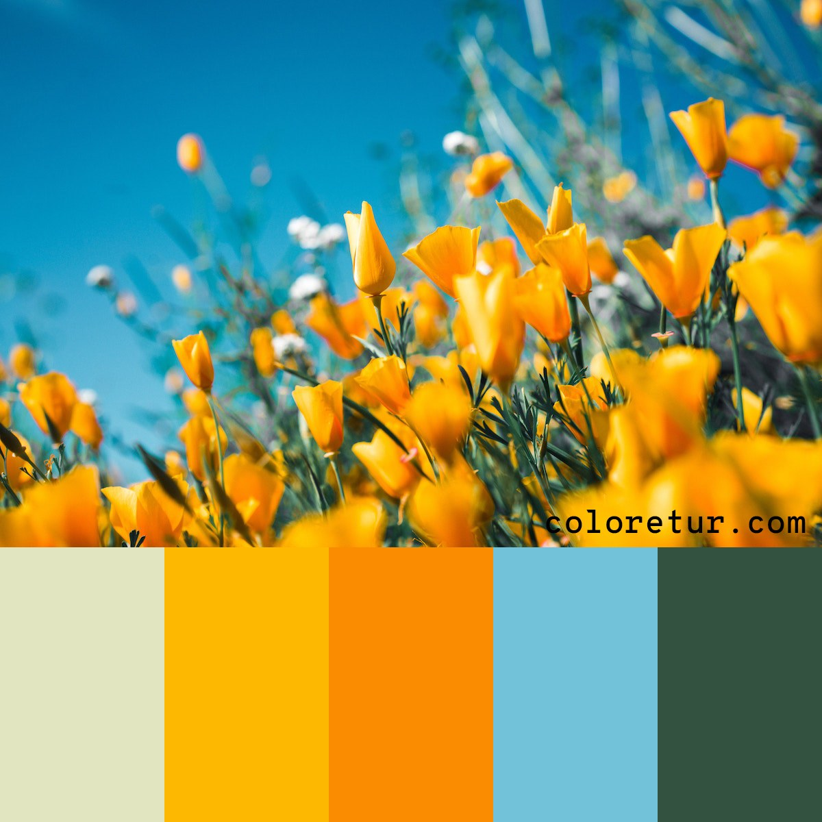 A bright, summery palette from a field of golden blooms.