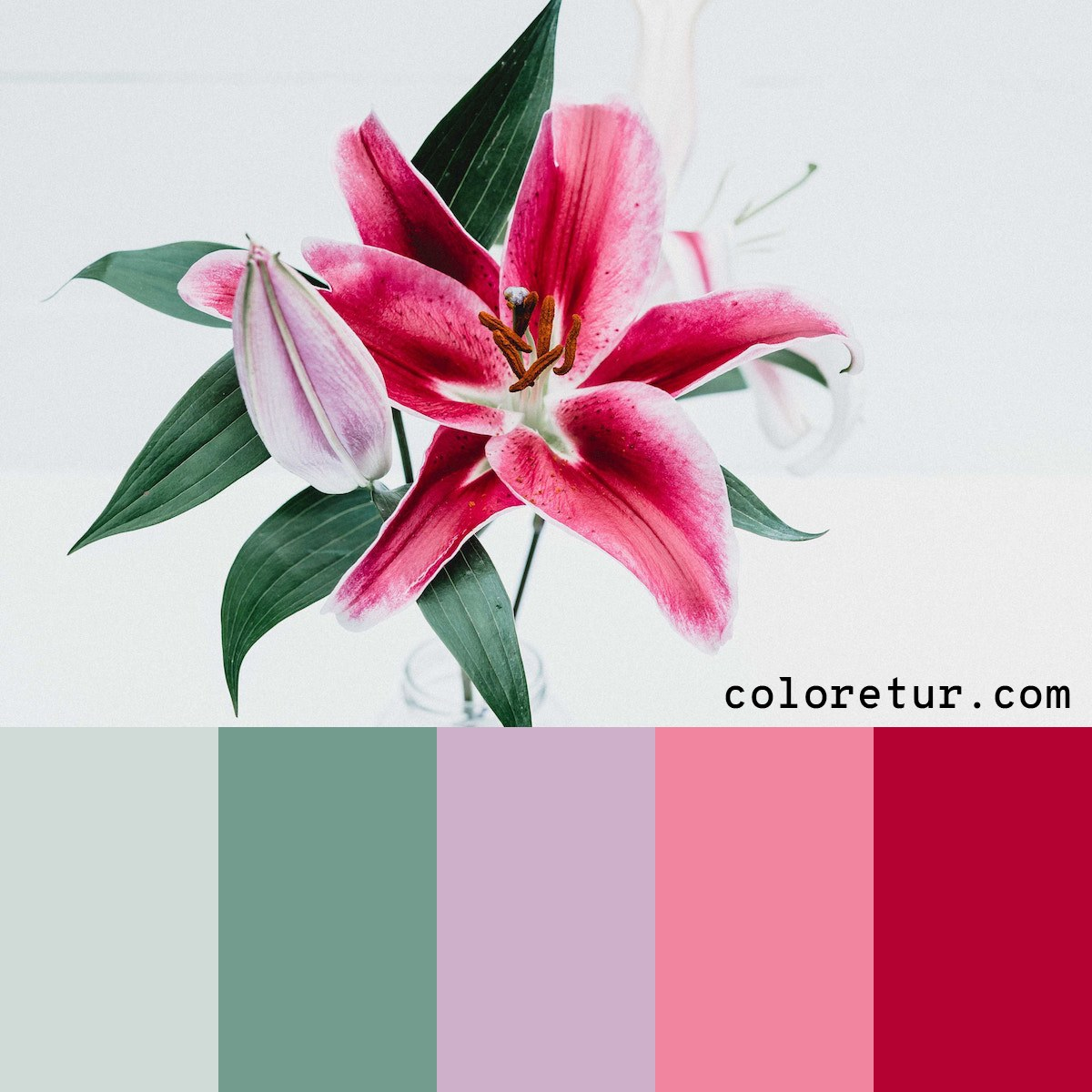 A light, refreshing palette chosen from a pink lily in bloom.