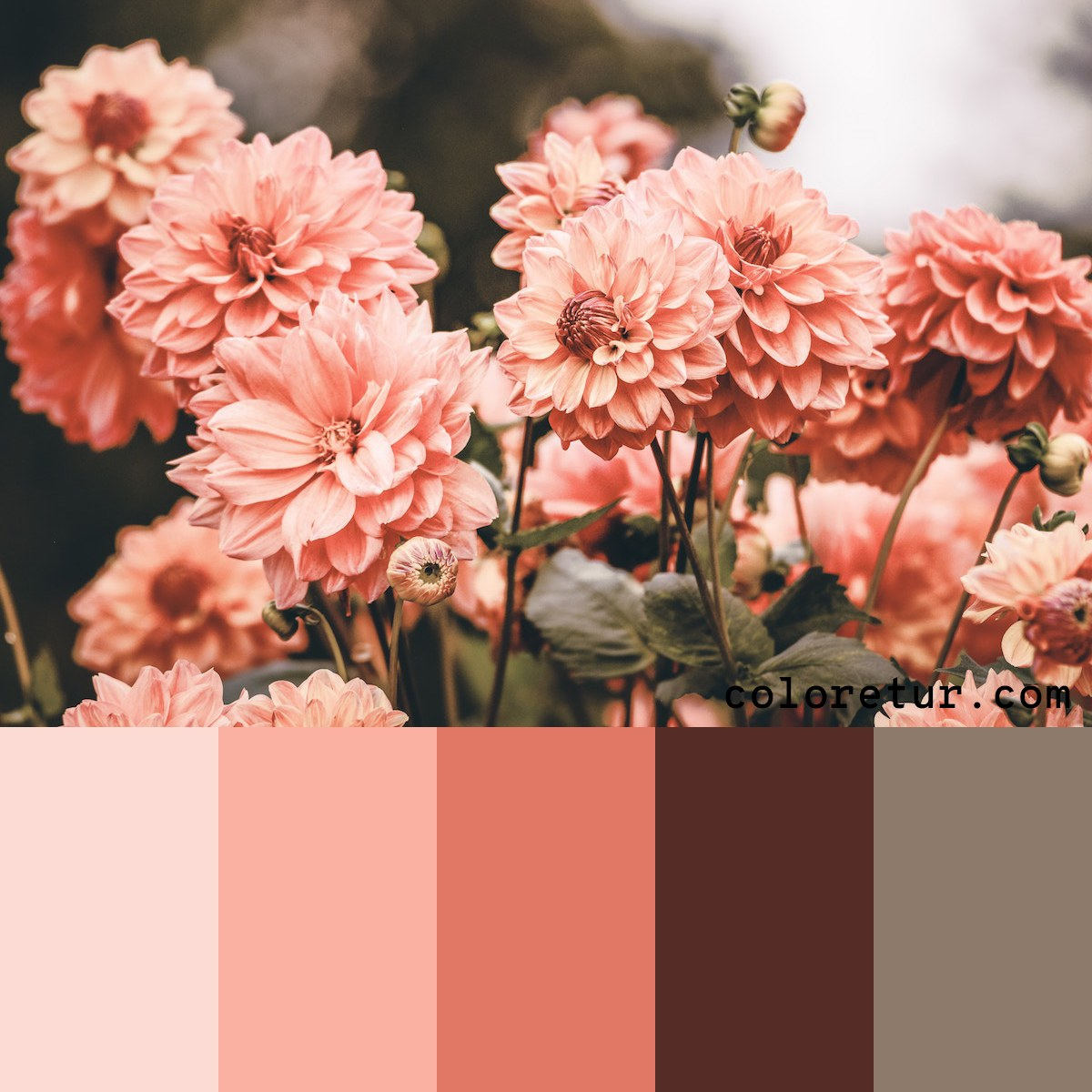 A muted color palette from pink daisies in soft dusk light.