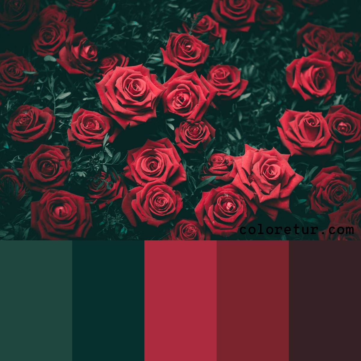 A dark, moody palette from a bouquet of red roses.
