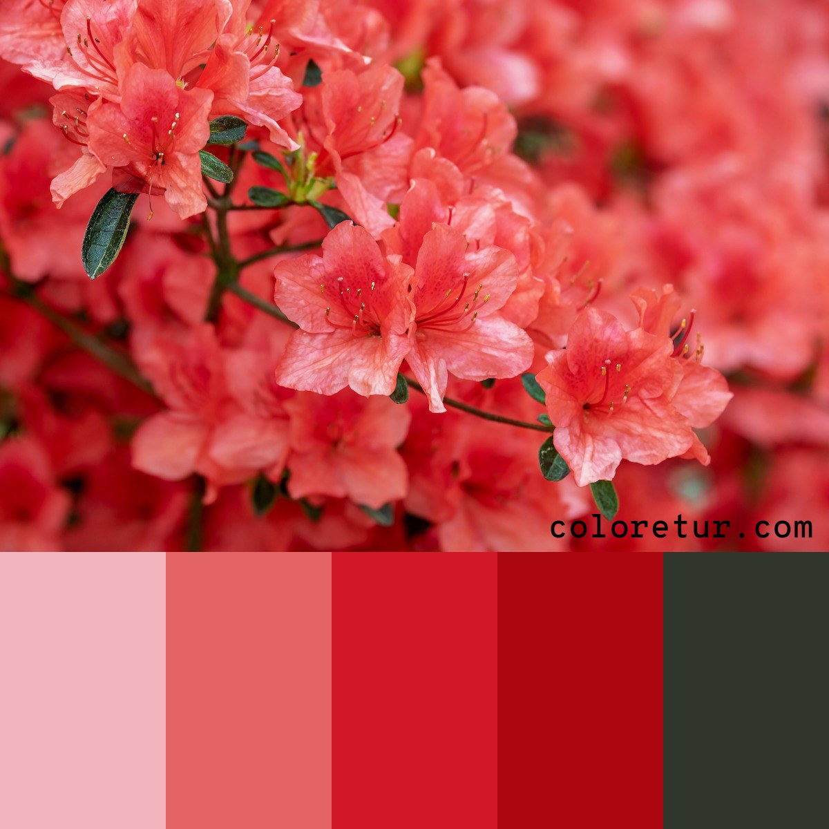 This palette has bright pinks and reds from the blooms of an Azalea.