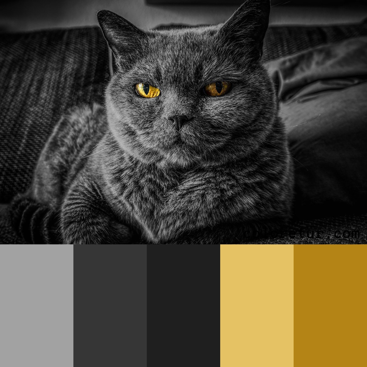 A black cat with piercing eyes brings striking contrast to this gray palette.