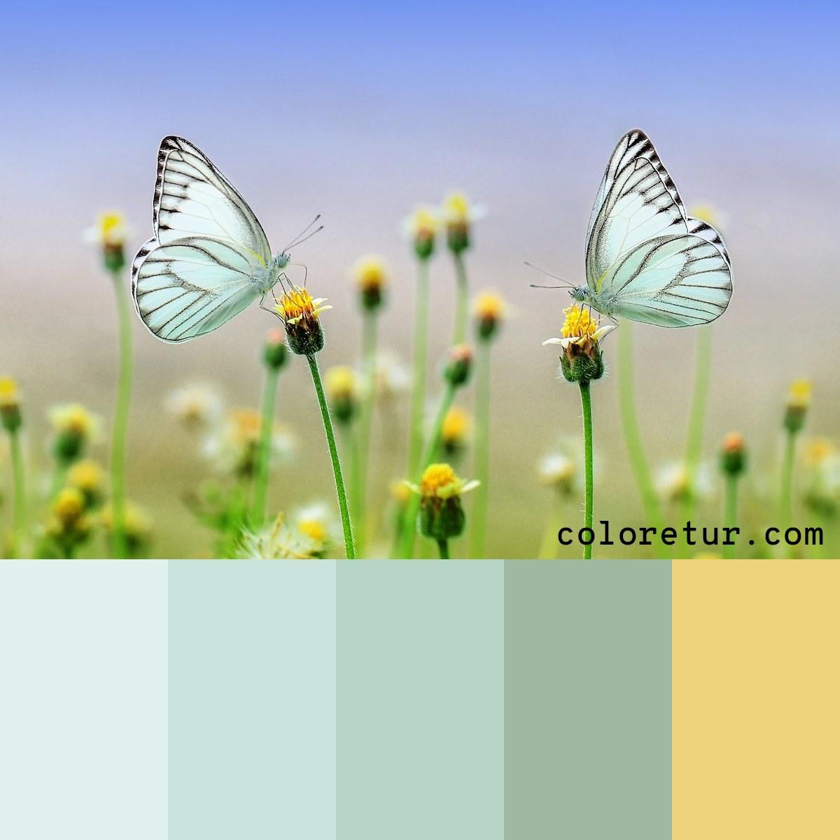 Translucent butterflies make for an elegant, whimsical palette.
