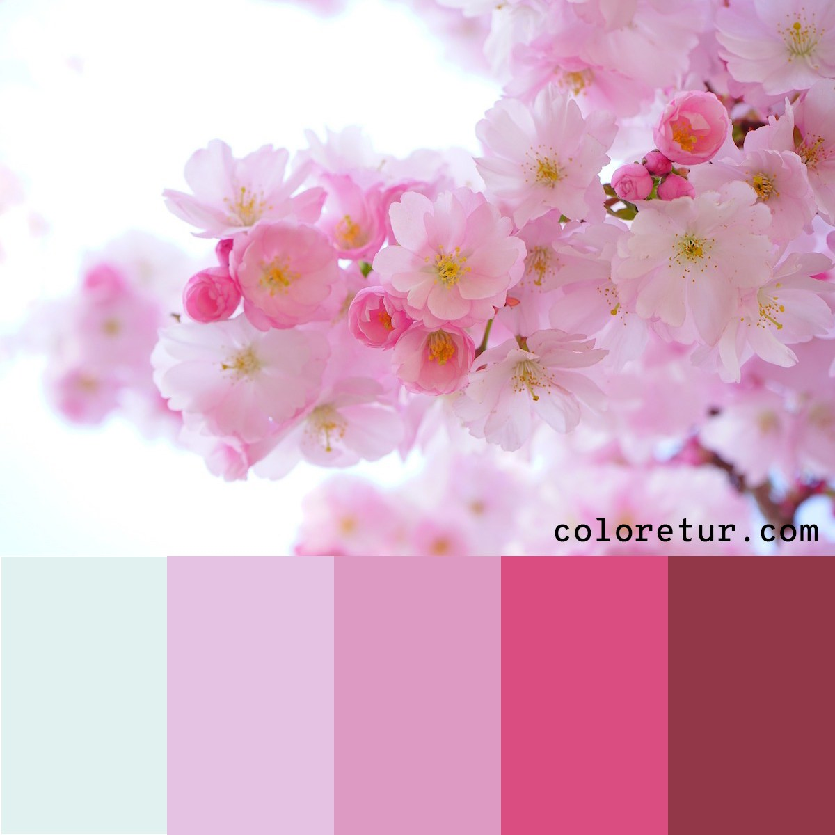 Pale pink cherry blossoms make a delicate color palette.