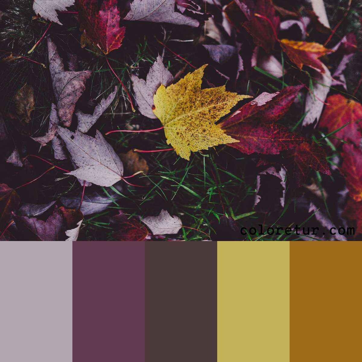 Fall leaves make vibrant color palettes.