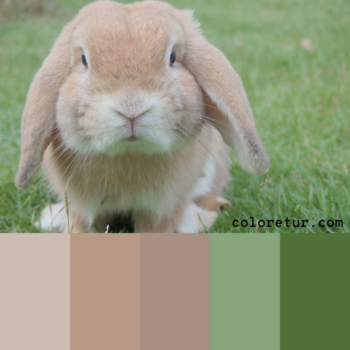 A soft, muted palette in the gentle tones from a baby rabbit.