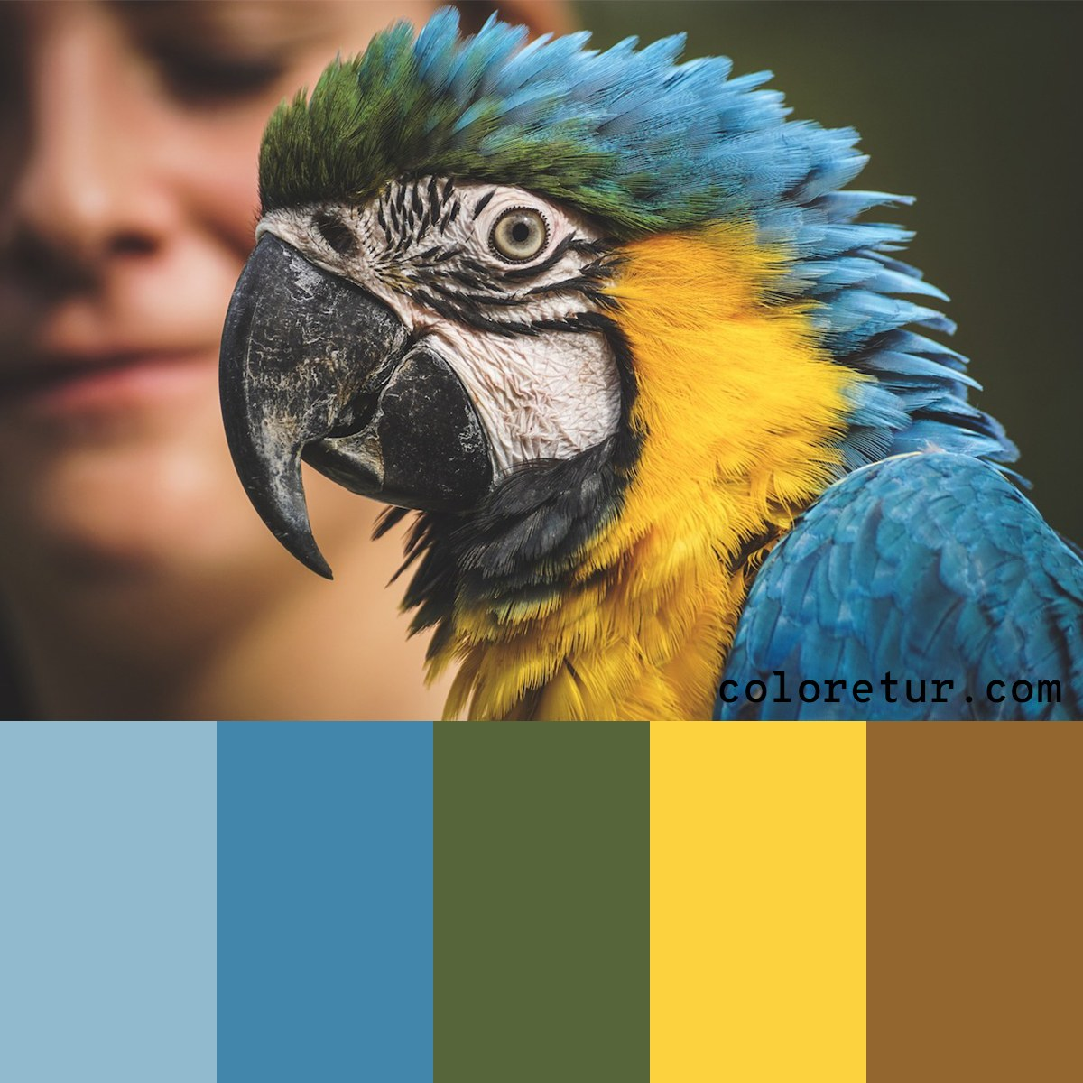 A bright, colorful palette from the feathers of a macaw.