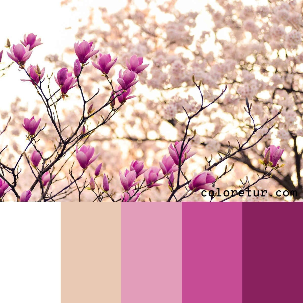 Beautiful magenta flowers make this color palette sing.