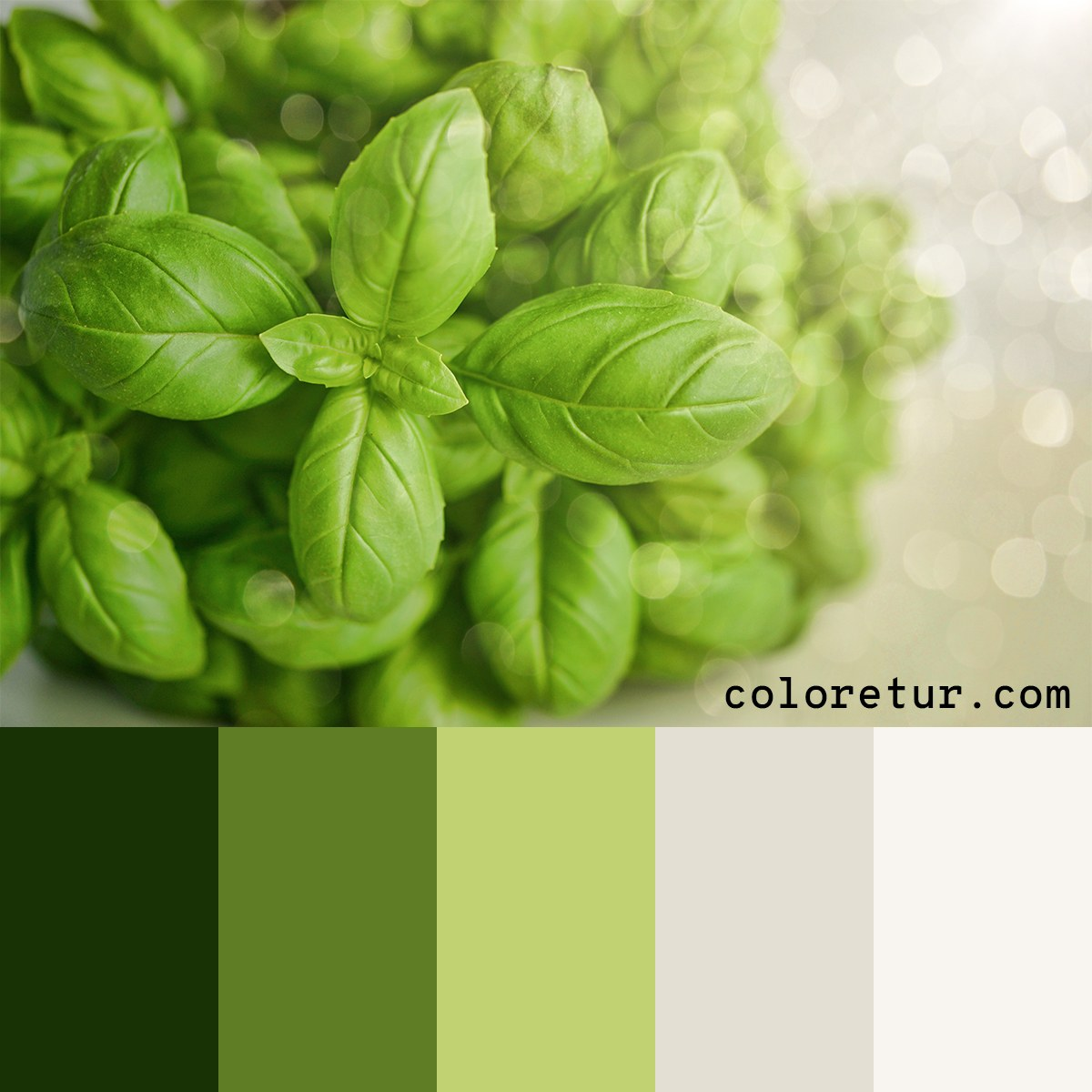 A bright, green palette composed from fresh basil leaves.
