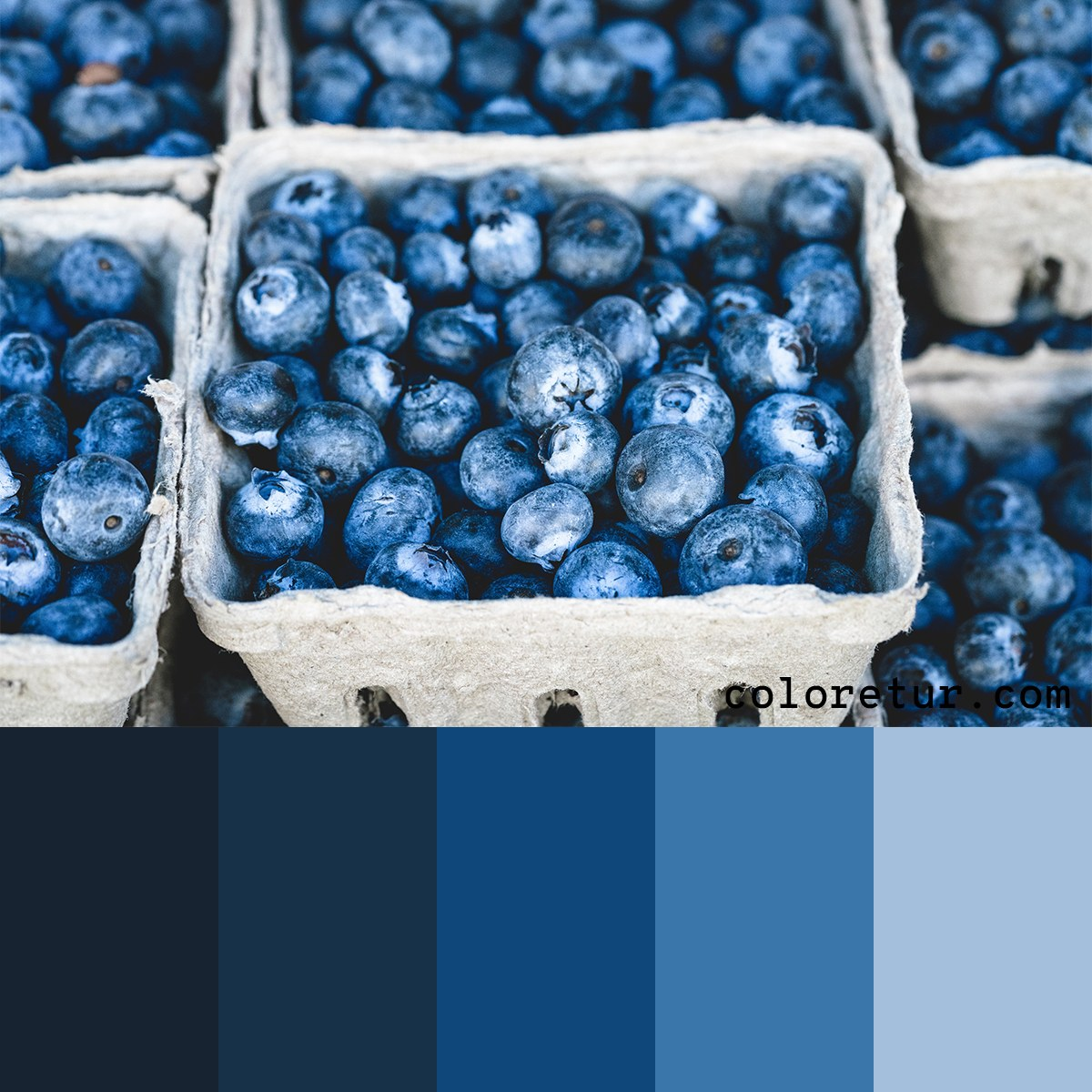 Deep, blue tones from blueberries stacked in punnets