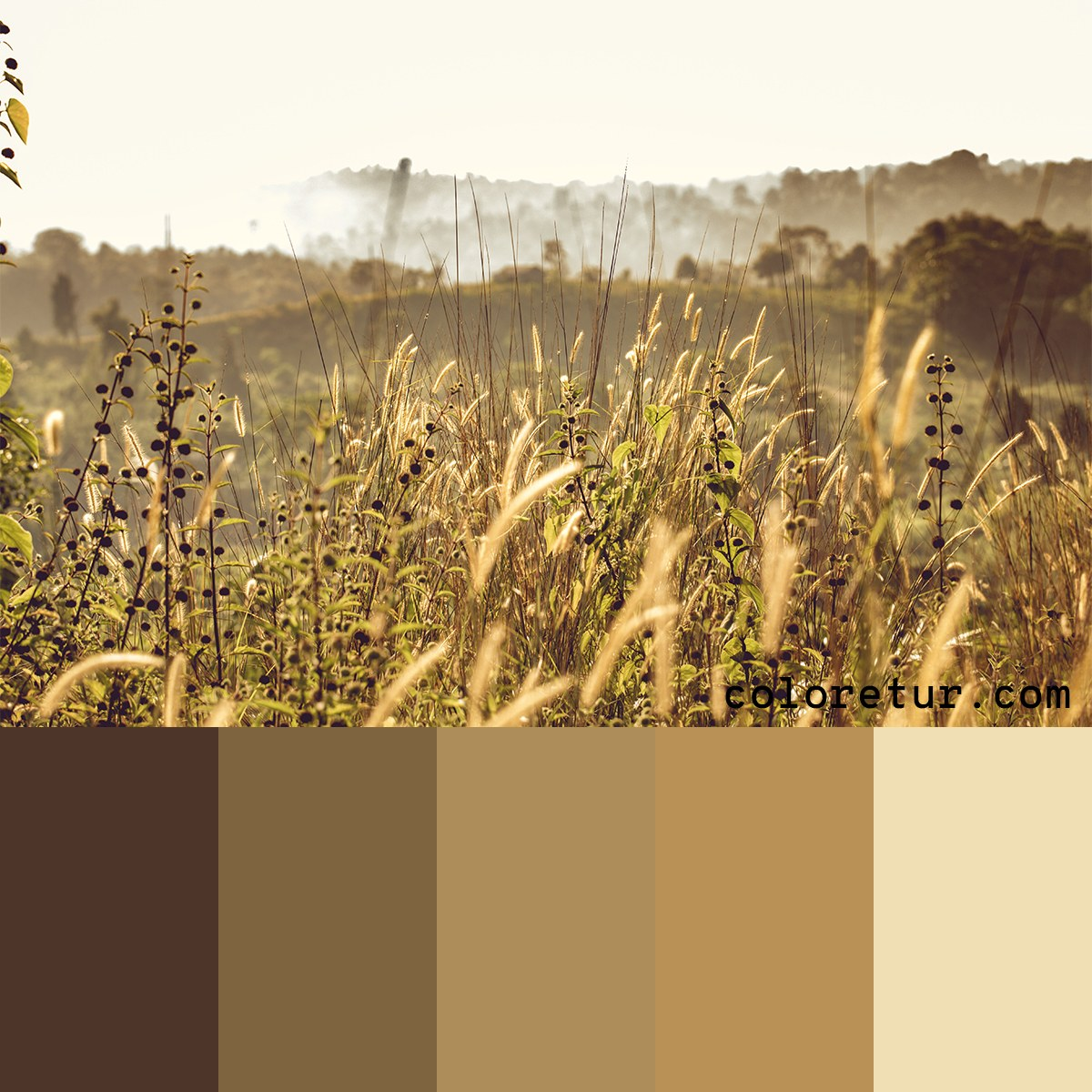 A warm, rich palette with earthy tones from dry grass fields.